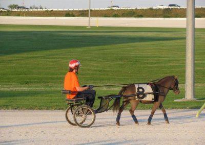 miniature horse racing